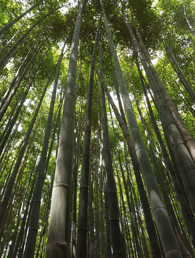 bamboo-wood-leaf-nature-lush picture material