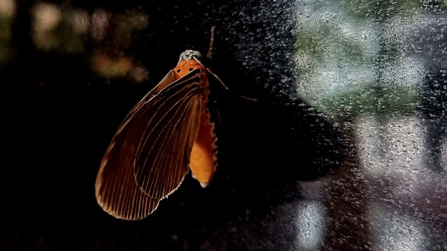 invertebrate-insect-moths-and-butterflies-organism-macro-photography picture material