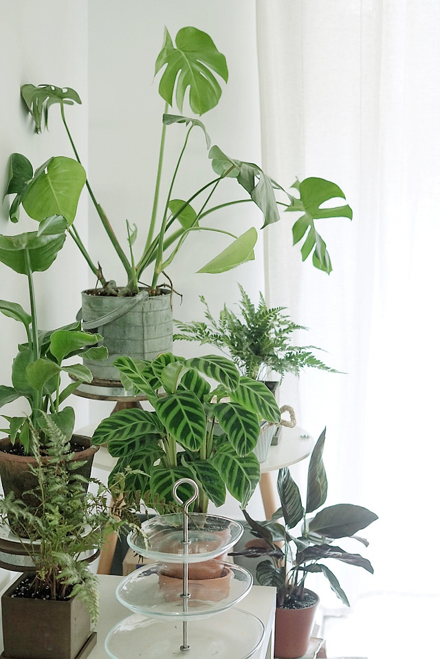 flora-leaf-pot-houseplant-growth picture material
