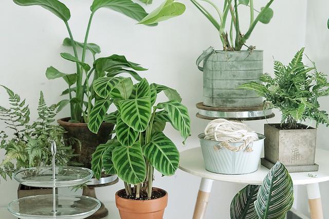 no-person-leaf-houseplant-pot-flora picture material