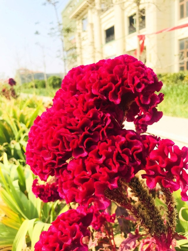 flower-flora-petal-nature-no-person picture material