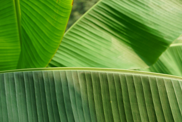 leaf-flora-growth-photosynthesis-green picture material