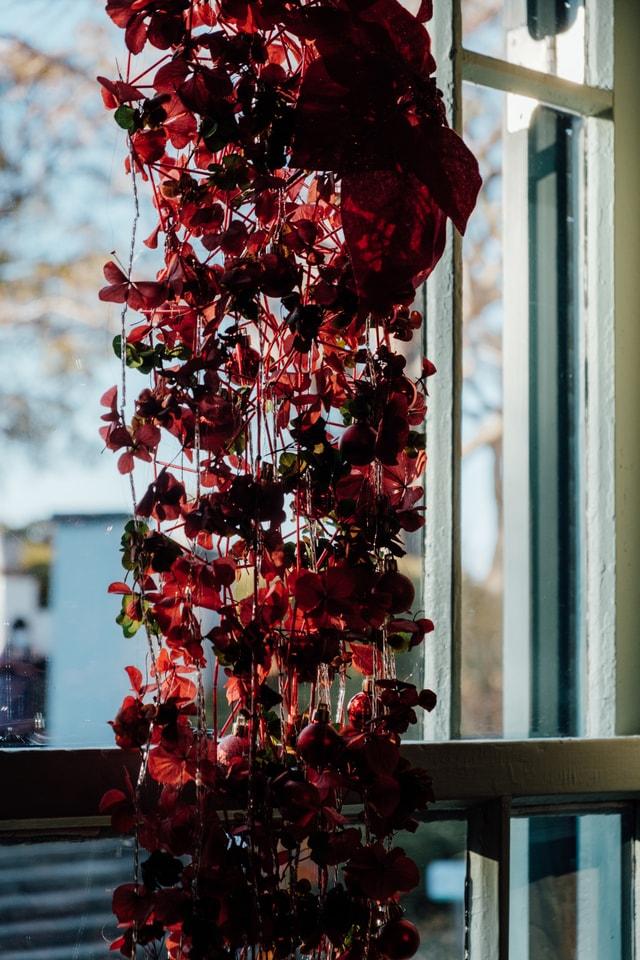 japan-flower-interior-yokohama-christmas-decoration 图片素材