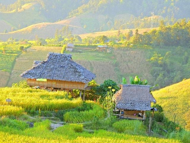 field-farm-agriculture-landscape-grass picture material