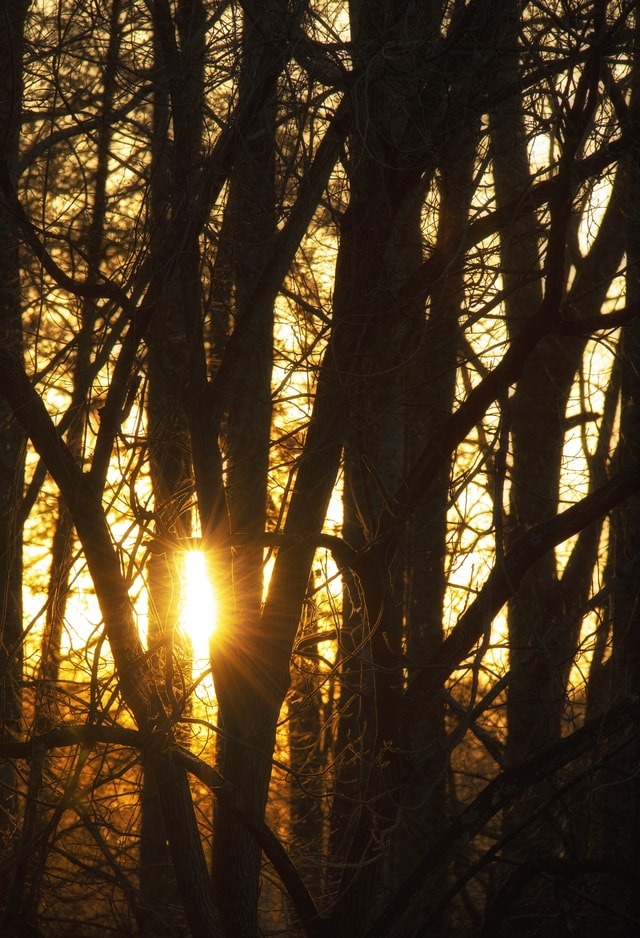 sunset-through-the-trees picture material