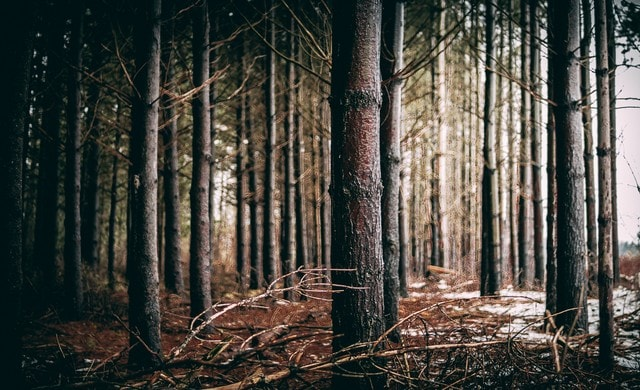 the-forest-trees picture material