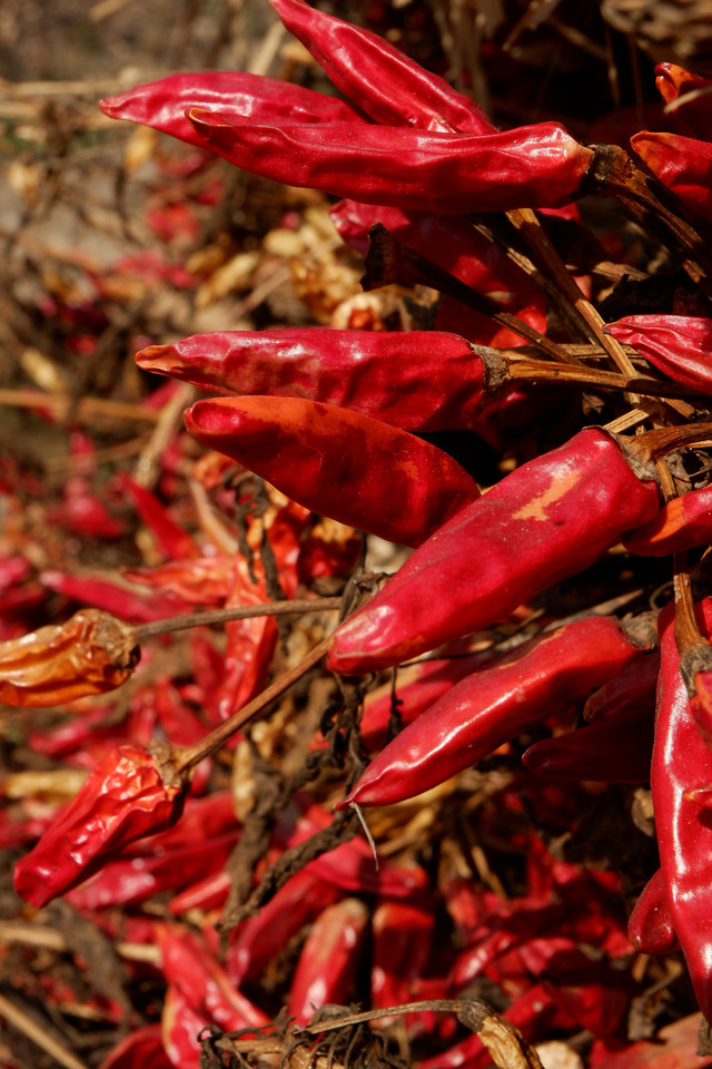 spice-vegetable-autumn-harvest-chili-pepper 图片素材