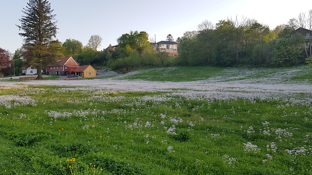 landscape-house-grass-no-person-nature picture material
