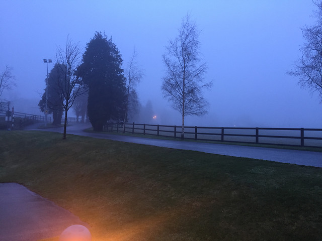 dawn-landscape-fog-light-tree picture material