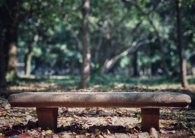 nature-tree-leaf-bench-wood picture material