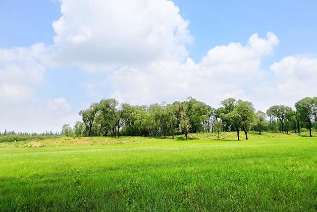 grassland picture material