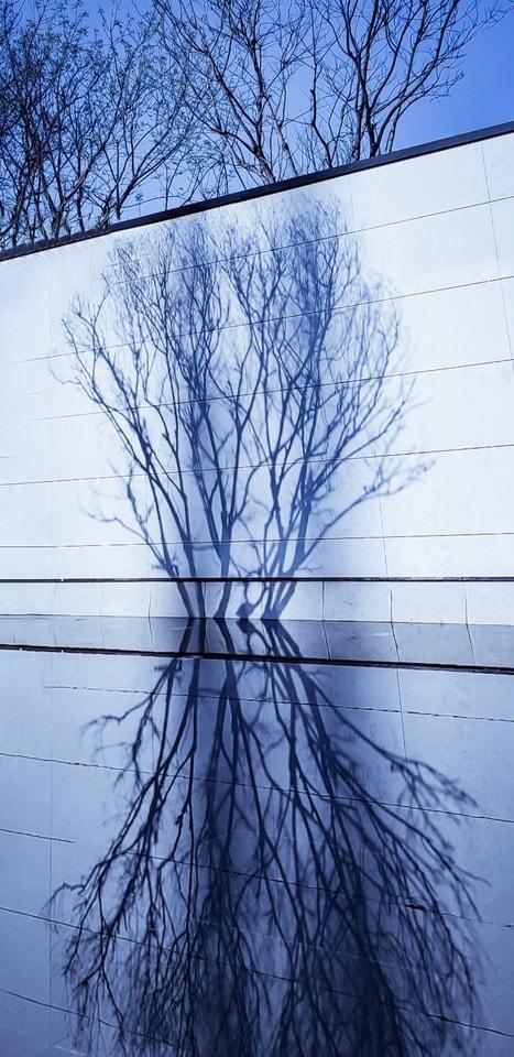 tree-blue-branch-sky-woody-plant 图片素材