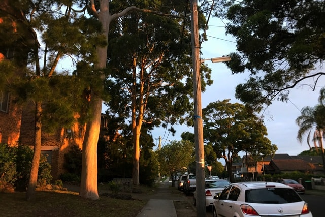 sunset-tree-vehicle-car-woody-plant 图片素材