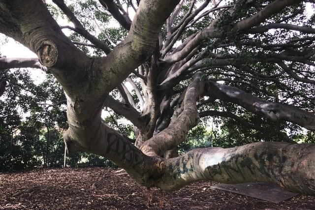 big-tree-tree-branch-woody-plant-trunk 图片素材