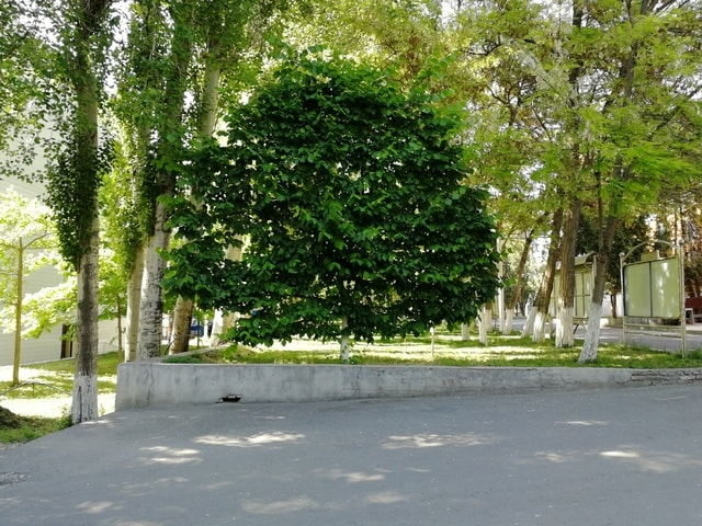 summer-tree-green-public-space-woody-plant 图片素材