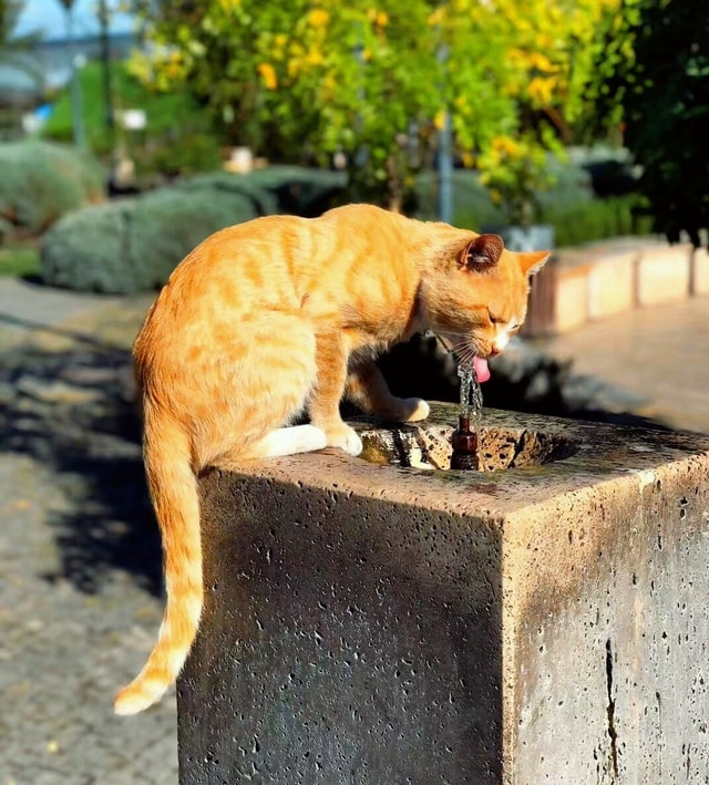 cat-grass-drinking-water-outdoors-late-autumn 图片素材