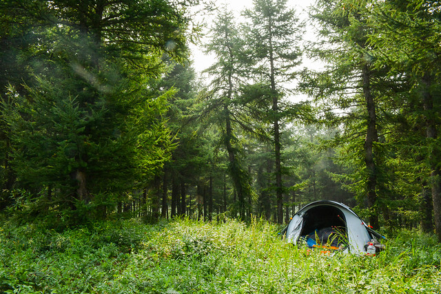 nature-tree-grass-landscape-camping picture material