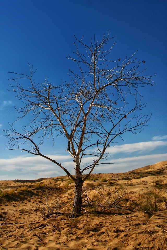 natural-tree-sky-branch-woody-plant 图片素材