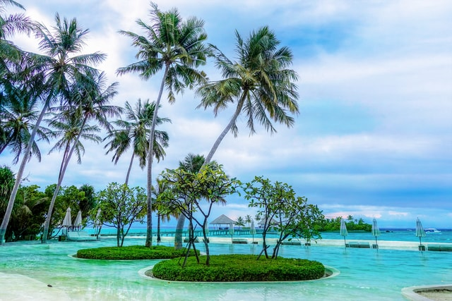 resort-tree-vacation-water-ocean picture material