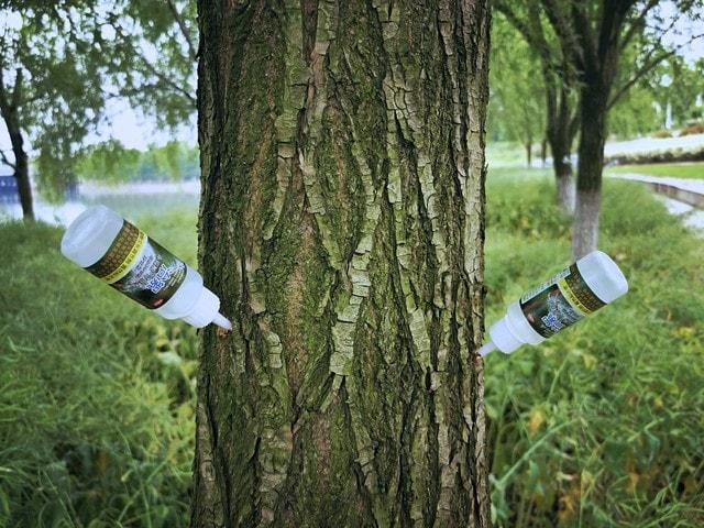 tree-trunk-woody-plant-canoe-birch-plant 图片素材
