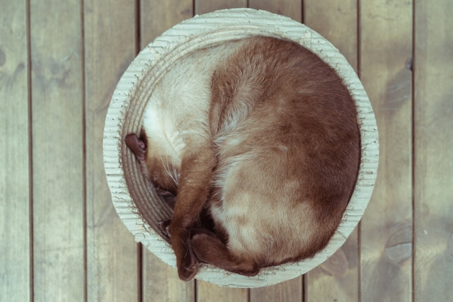 cat-sleeping-in-a-round-cat-litter-a-cat-sleeping-in-a-round-cat picture material