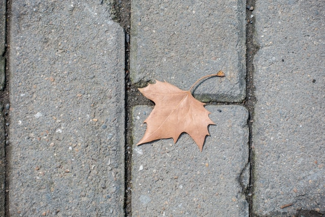 indus-leaves-on-the-ground-wutong-leaves-on-the-ground picture material