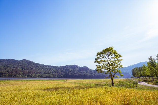 empty-field-a-tree-in-the-open-plains picture material