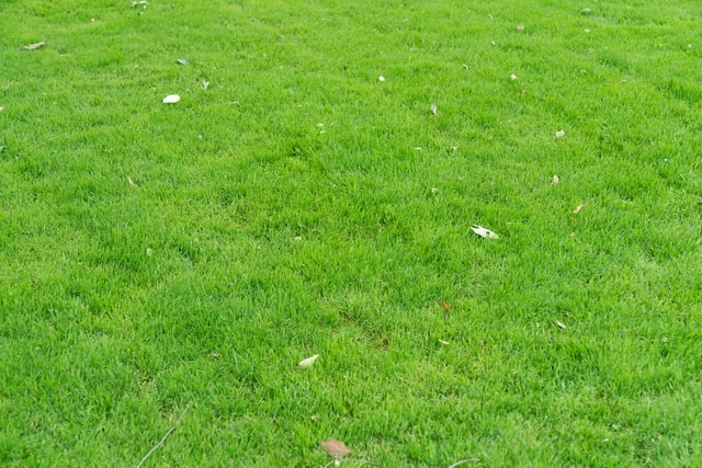 outdoor-green-lawn-grass-green-lawn-outdoors 图片素材
