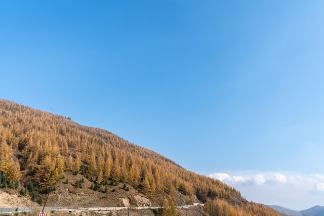 autumn-mountains-and-forests-and-forests-in-autumn picture material