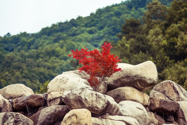 a-red-leaf-in-a-pile-of-stones-in-the-mountains-a-red-leaf-in-a-mountain-of-stone picture material