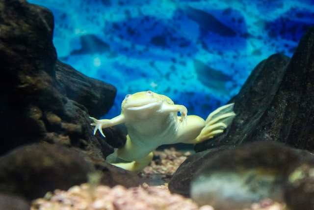 playful-frog-are-posing-photographic-frogs picture material