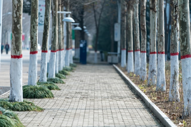 a-walkway-between-two-rows-of-trees 图片素材