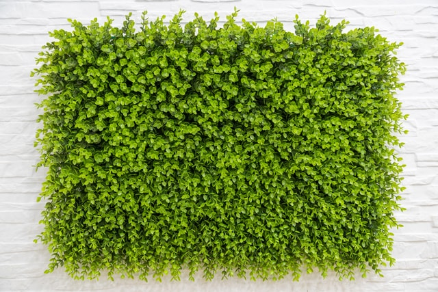 used-to-decorate-the-green-plant-wall-used-to-decorate-wall-of-green-plants picture material