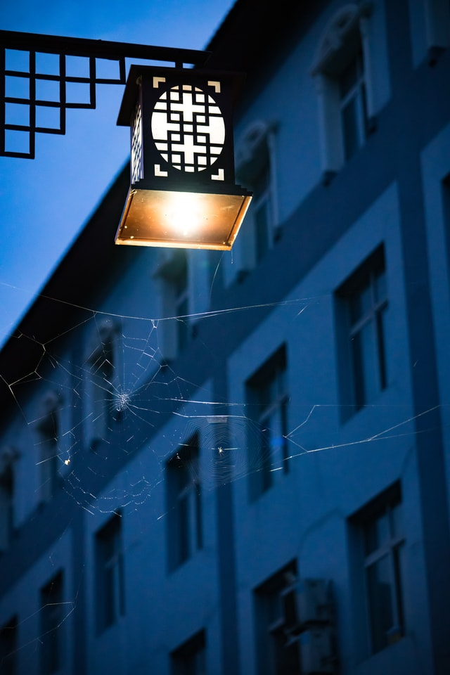 spider-webs-under-street-lamps-at-night-under-night-lights picture material
