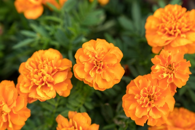 flowers-blooming-in-tianjin-park-flowers-in-full-bloom-in-tianjin-park picture material