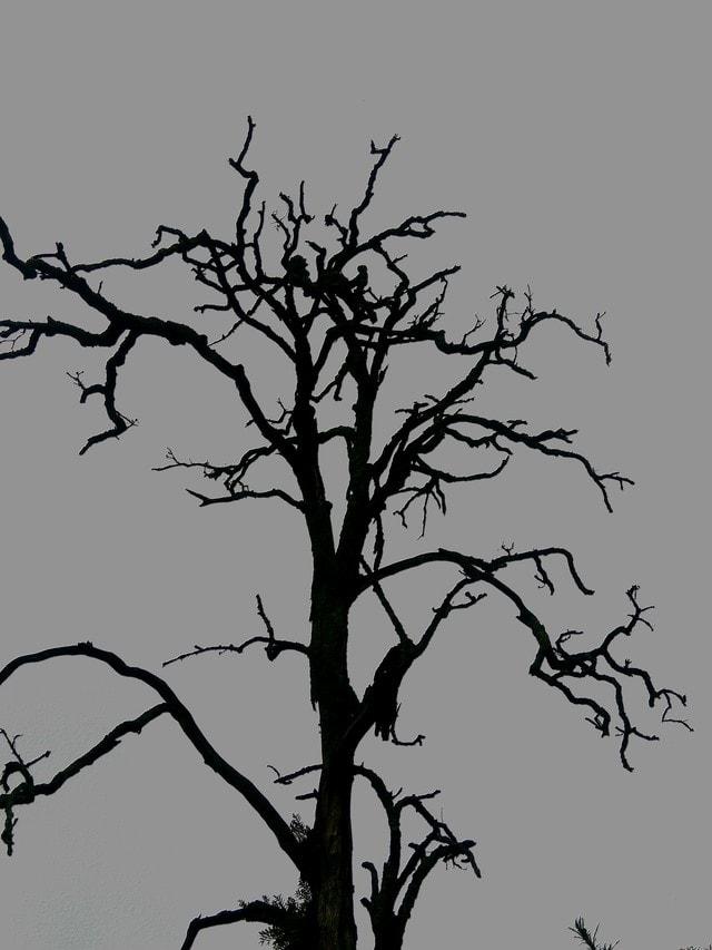 tree-branch-twig-woody-plant-plant 图片素材