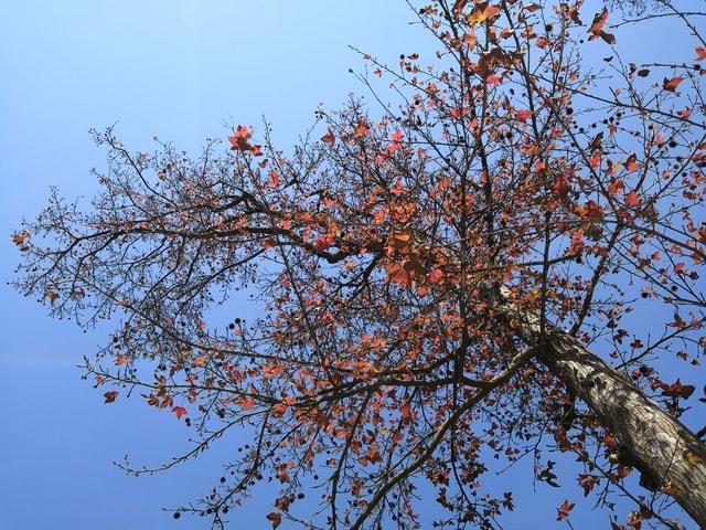 tree-branch-plant-woody-plant-sky 图片素材