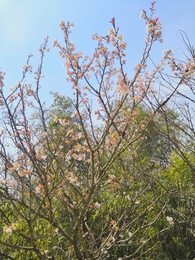 spring-tree-plant-flower-woody-plant 图片素材