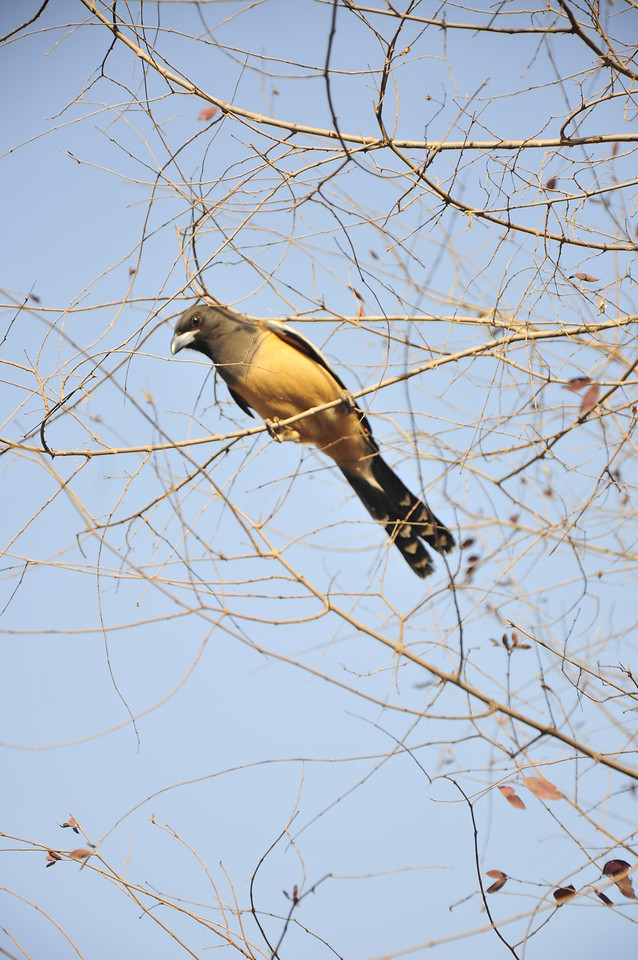 tree-bird-nature-sky-winter 图片素材