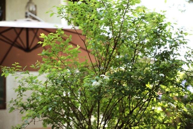 green-plant-tree-plant-flower-woody-plant 图片素材