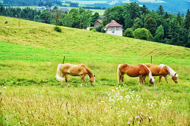 pasture-grass-hayfield-field-farm picture material