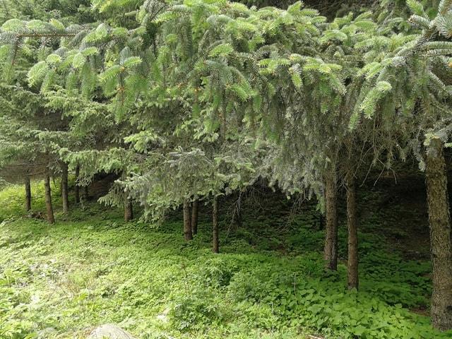 tree-vegetation-plant-woody-plant-biome 图片素材