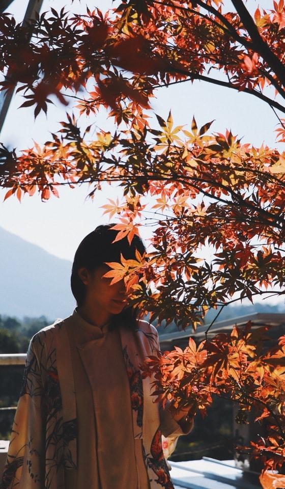 tree-leaf-woody-plant-plant-autumn 图片素材