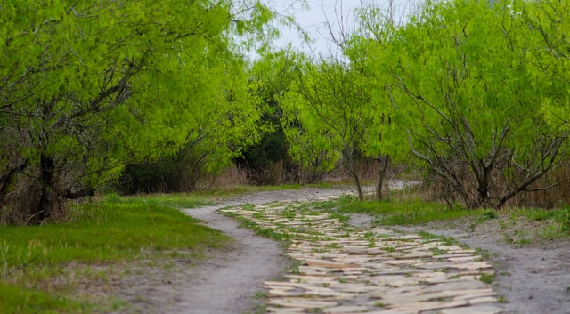 winding-path-trees-stepping-stones-vibrant-nature picture material