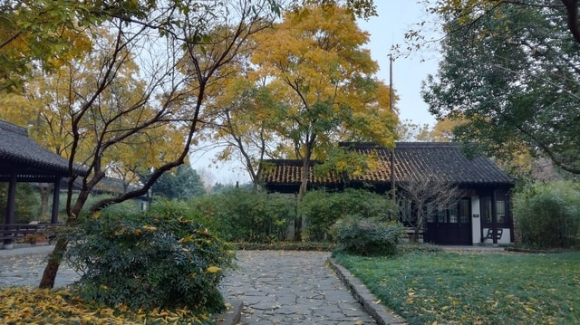 house-tree-landscape-garden-fallen-leaves 图片素材