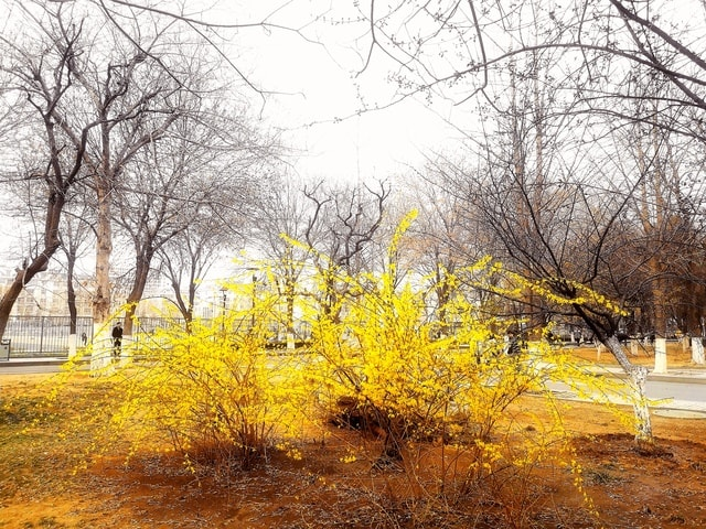 tree-natural-landscape-nature-yellow-woody-plant 图片素材