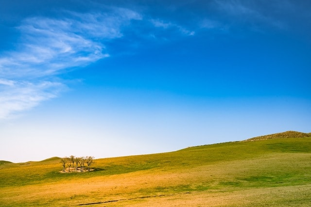 grassland-lone-tree-sky picture material