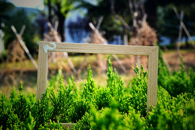 wood-nature-no-person-tree-garden picture material