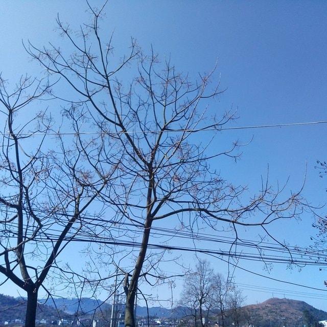tree-branch-sky-blue-woody-plant 图片素材
