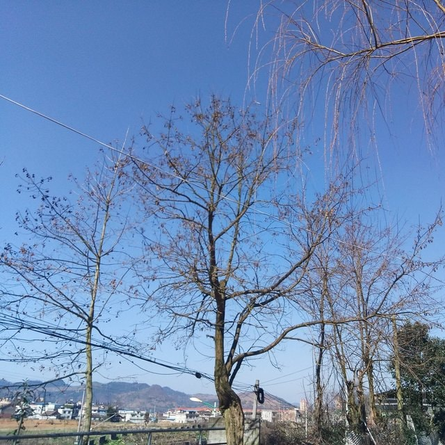 tree-sky-branch-woody-plant-plant 图片素材